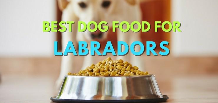 Best dog food for labradors best dog food for labradors forumfinder Choice Image