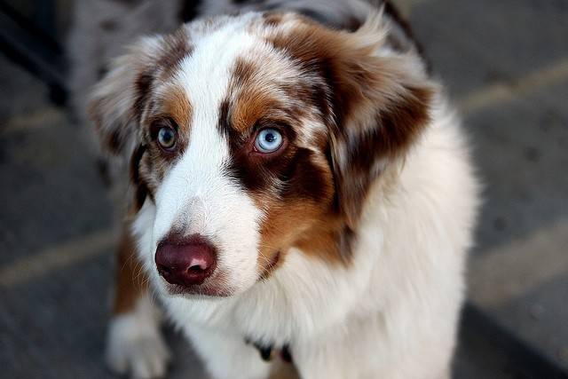 Causes Of Different Breeds Of Dogs And Cats