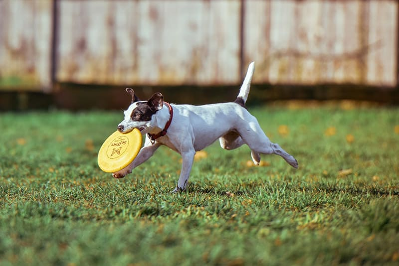 12 Tricks to Deal with Dog Separation Anxiety and Boredom