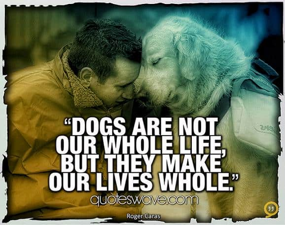 60 Inspirational Dog Quotes About Life And Love PlayBarkRun Unique Quotes About Dogs Love